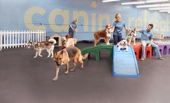 Dog Daycare at Canine Retreat
