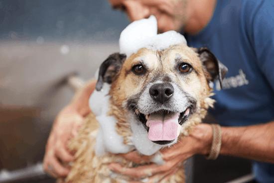 Dog Bathing at Canine Retreat