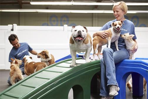 Pet Hotel Palos Verdes - Canine Retreat
